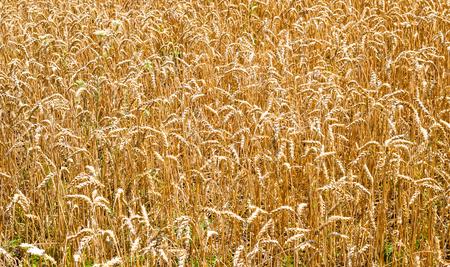 Content Audit - Die Spreu vom Weizen trennen